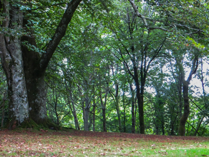 The grove of trees outside the Chapel of La Fontaine Blanche
