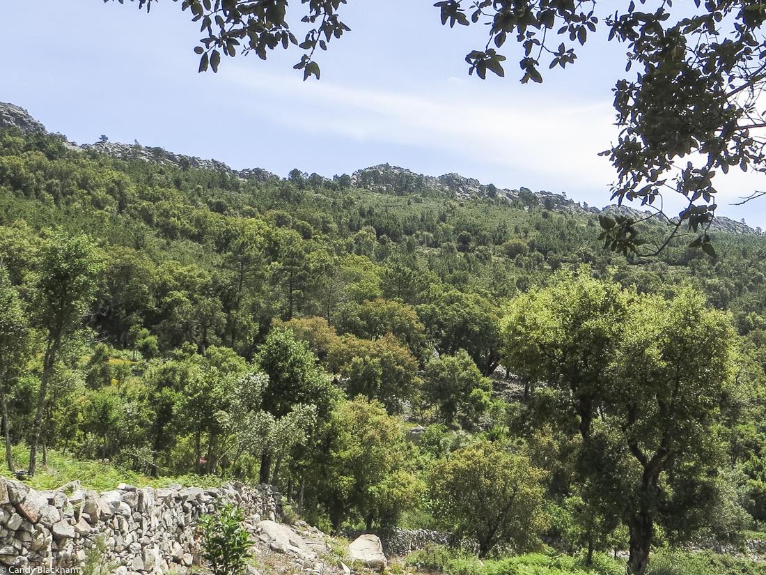 The schist ridge above Carreiras