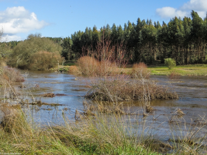 A flooded river along the M524