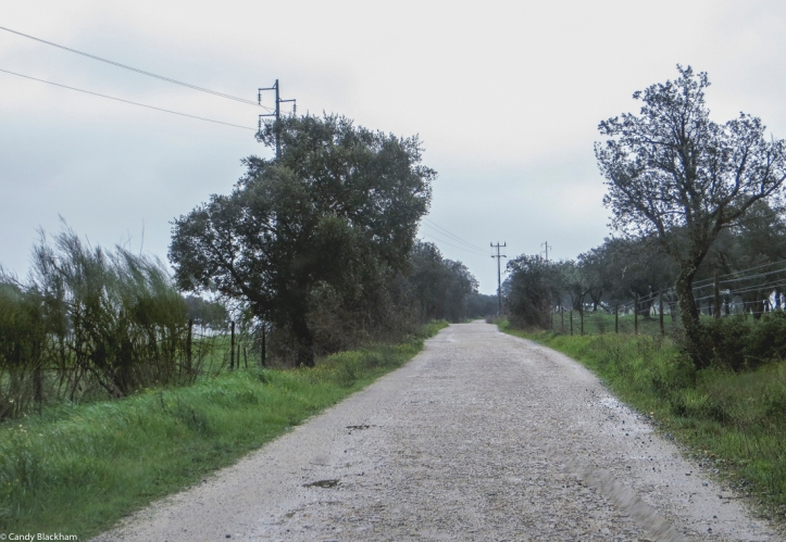 The road between Crato and Alter do Chao