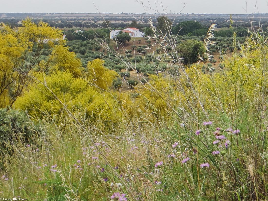 The countryside at Ouguela