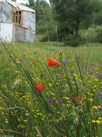 Wild flowers at Ouguela