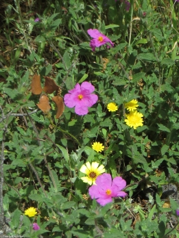 Wild flowers on the PR1 MFT
