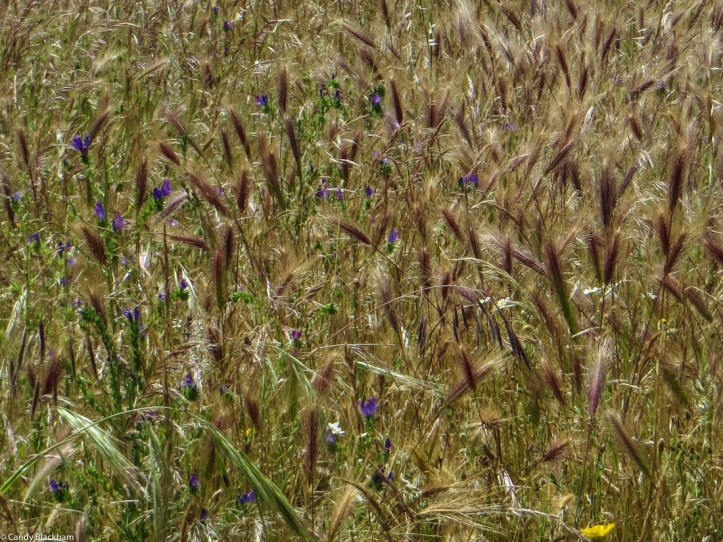 Grassy field on the PR1 MFT