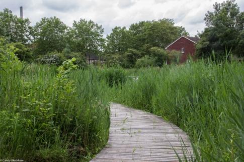 Lavender Pond Nature Reserve