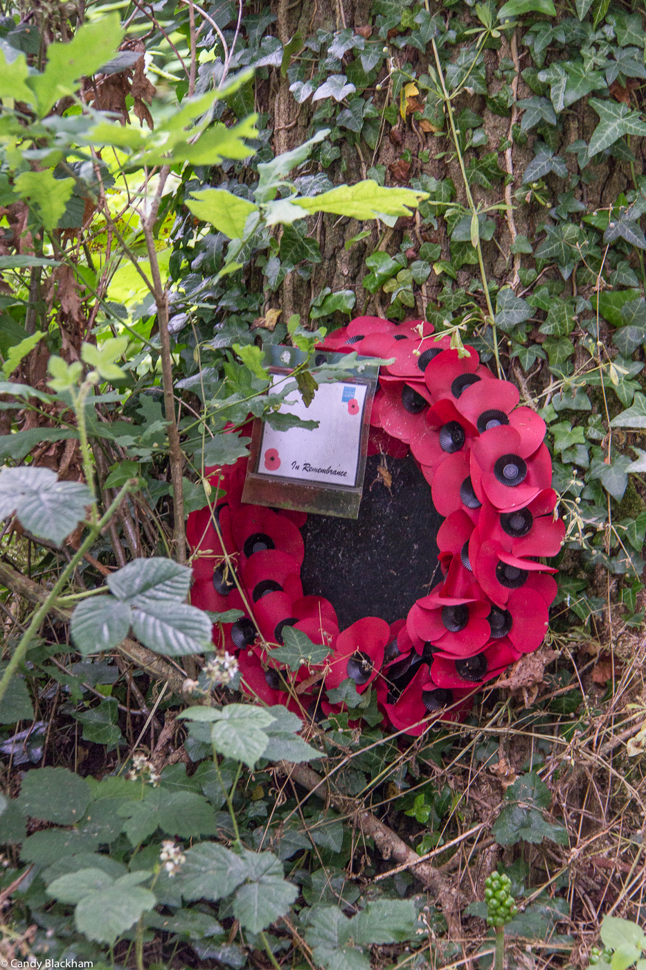 Inside the woods of Mametz