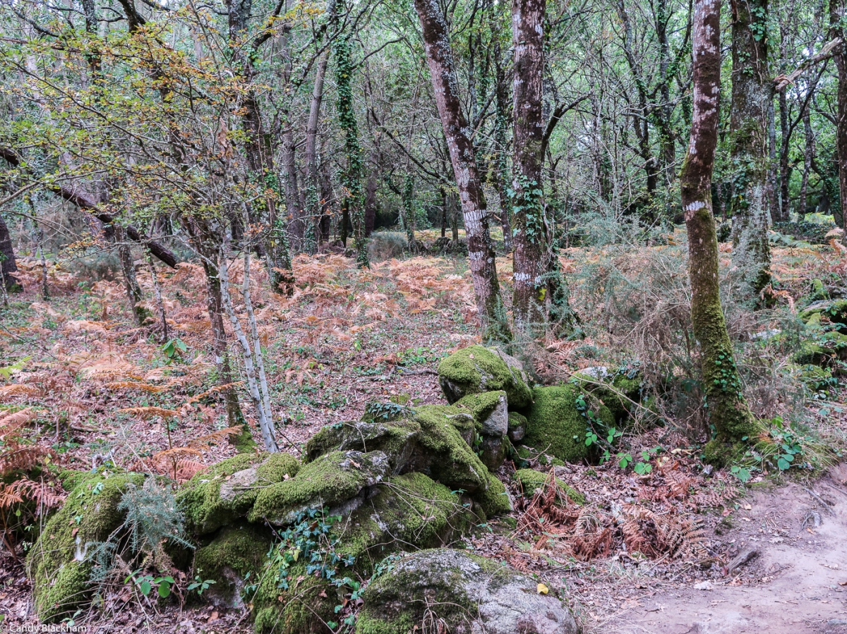 The Path of the Megaliths