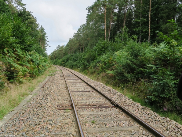 The railway in the Forest at Camors