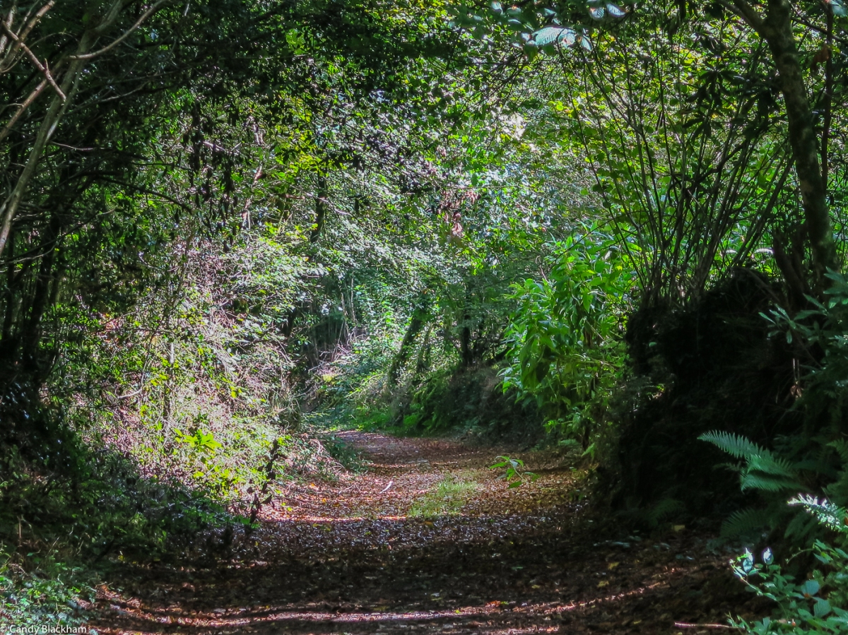A chemin creux, or green, sunken lane