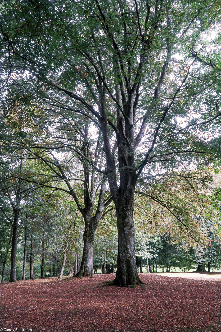 The grove of trees behind the Chapel of La Fontaine Blanche
